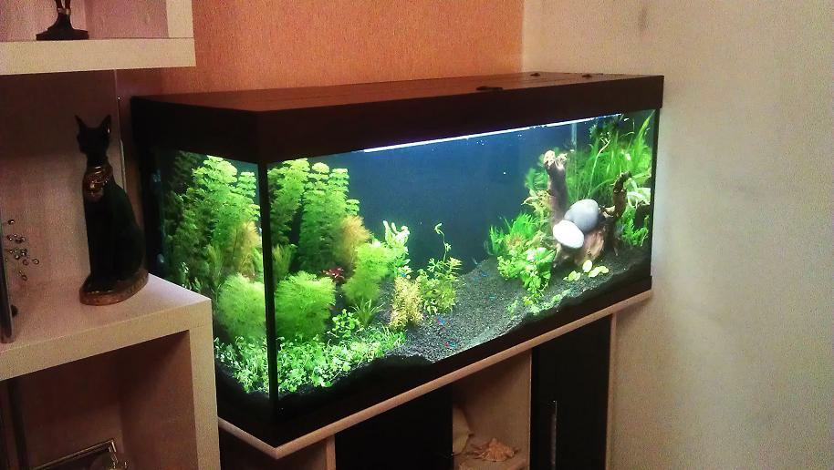 Оформление аквариума своими руками с фото